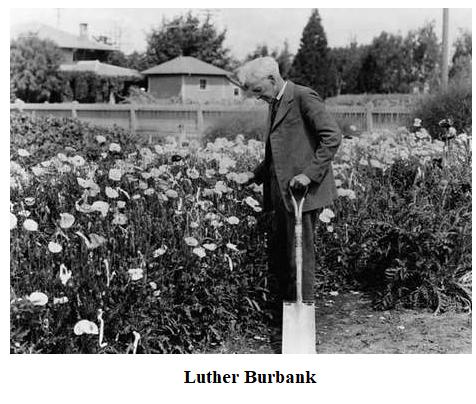 TIH_Burbank_Mar7
